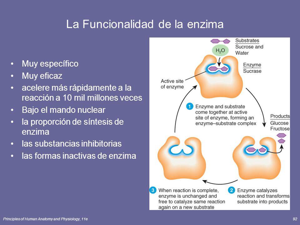 La Funcionalidad de la enzima