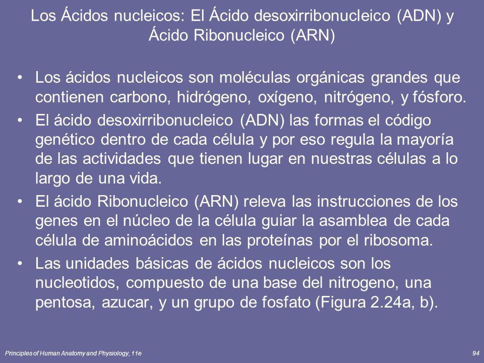 Los Ácidos nucleicos: El Ácido desoxirribonucleico (ADN) y Ácido Ribonucleico (ARN)