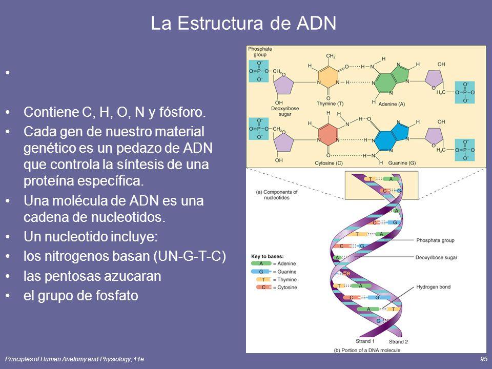 La Estructura de ADN Contiene C, H, O, N y fósforo.
