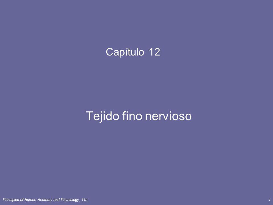 Capítulo 12 Tejido fino nervioso