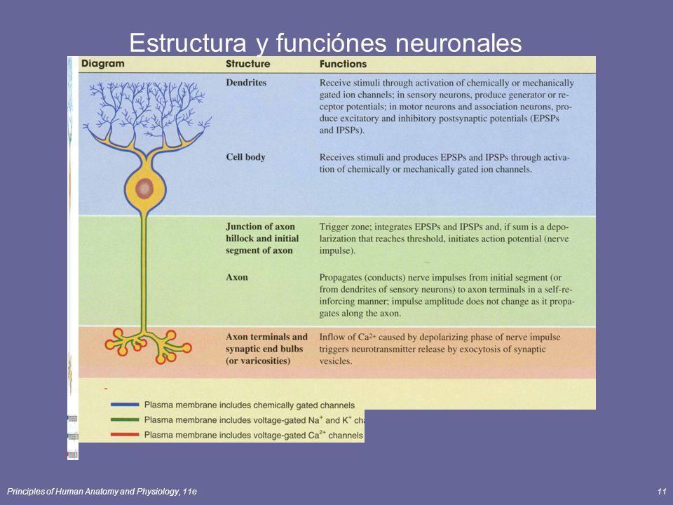 Estructura y funciónes neuronales