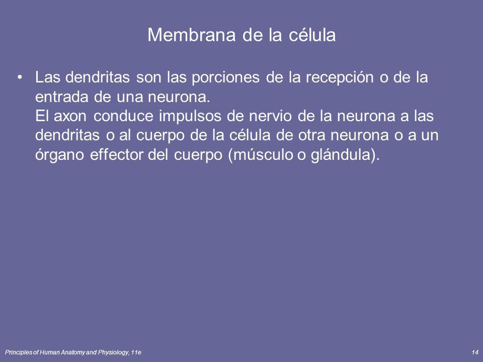 Membrana de la célula