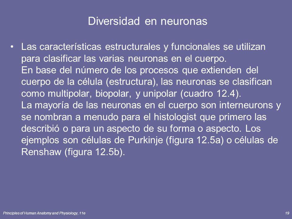 Diversidad en neuronas