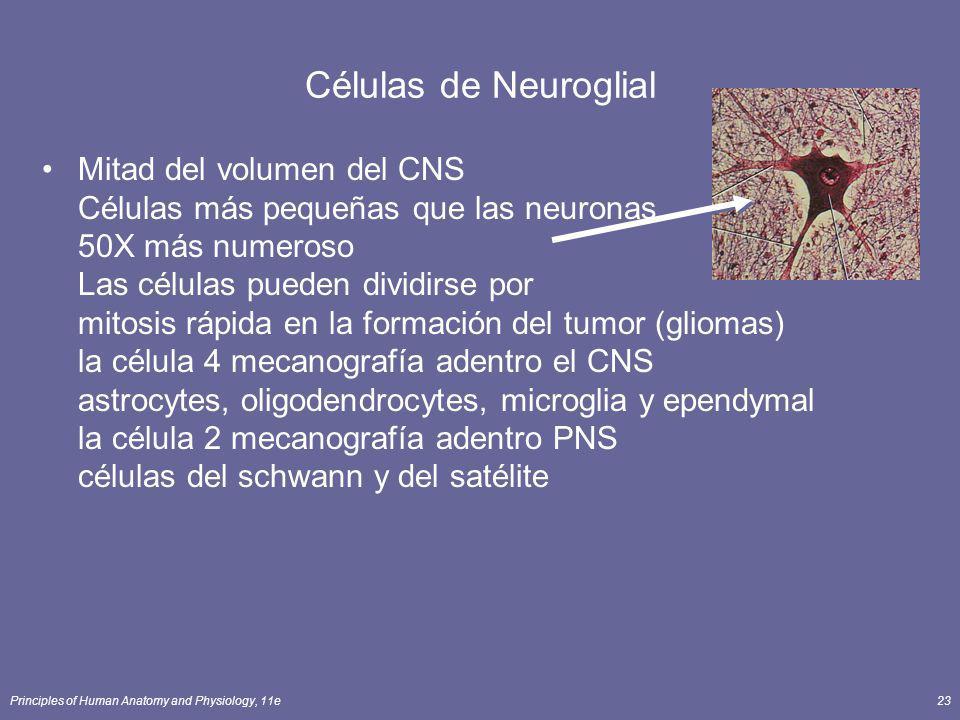 Células de Neuroglial