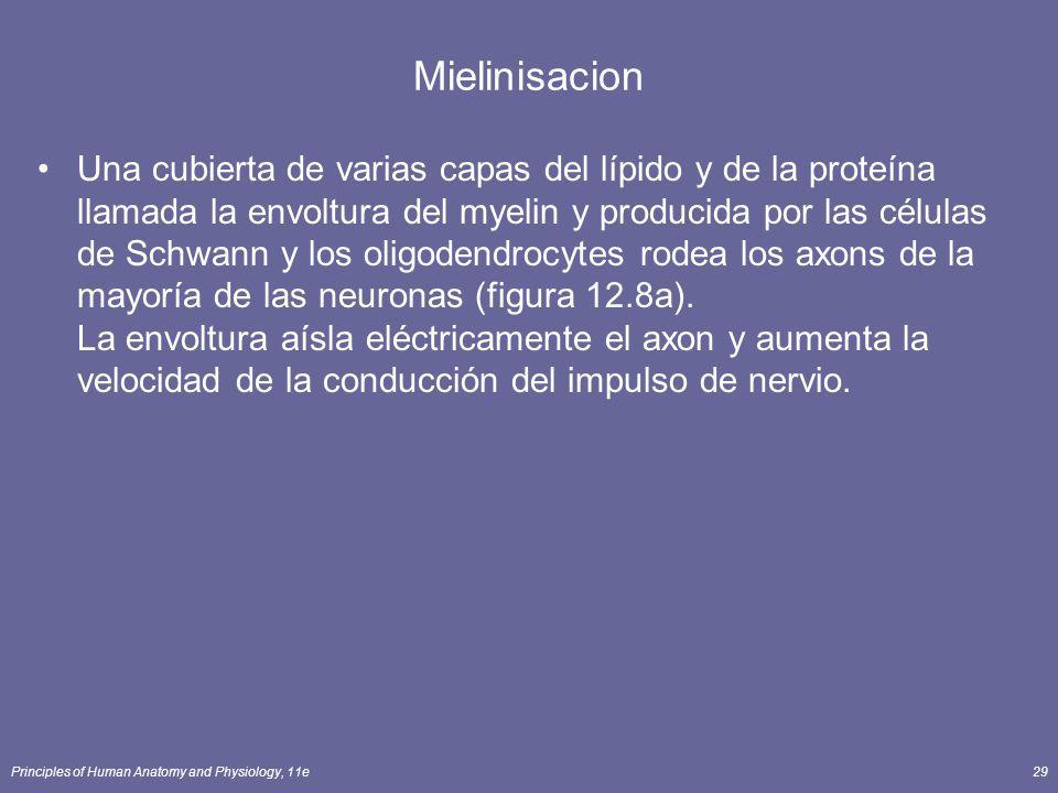 Mielinisacion