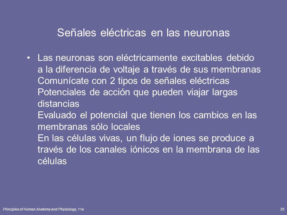 Señales eléctricas en las neuronas