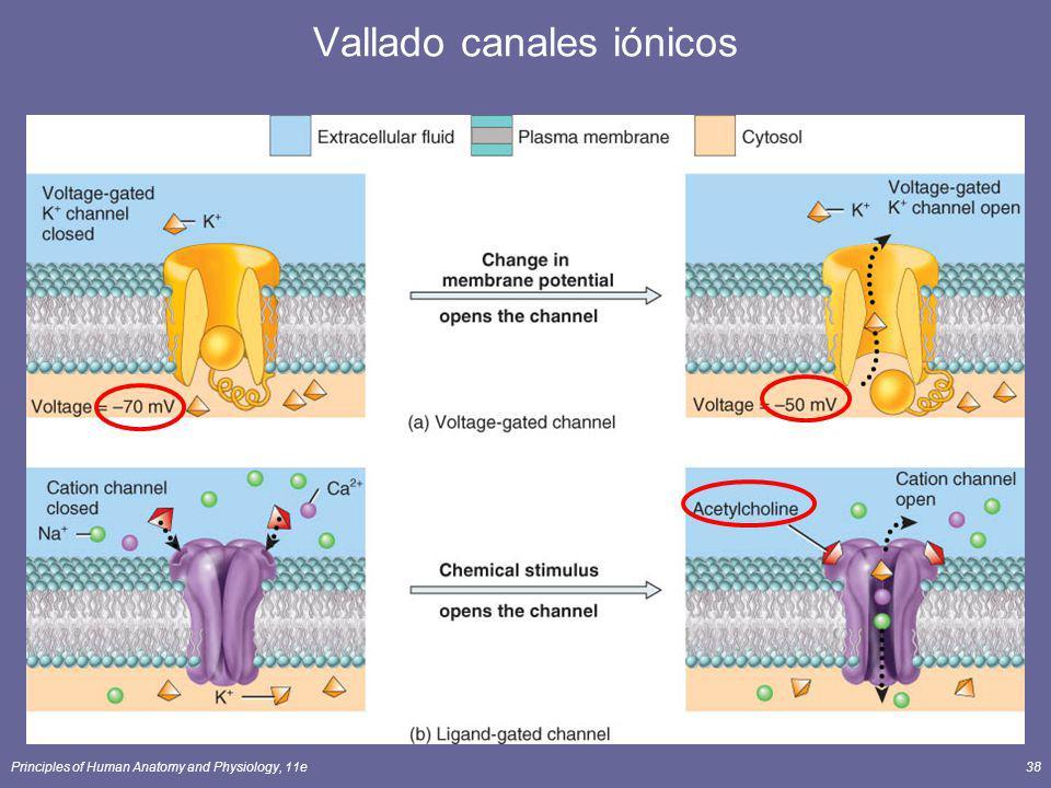 Vallado canales iónicos
