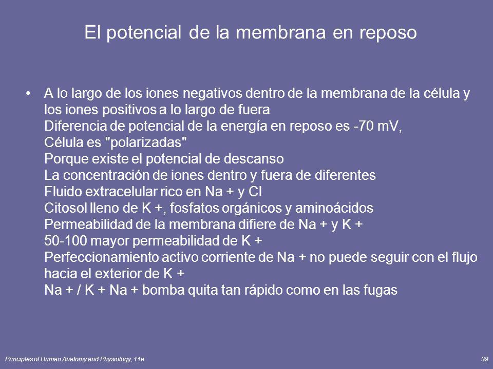 El potencial de la membrana en reposo