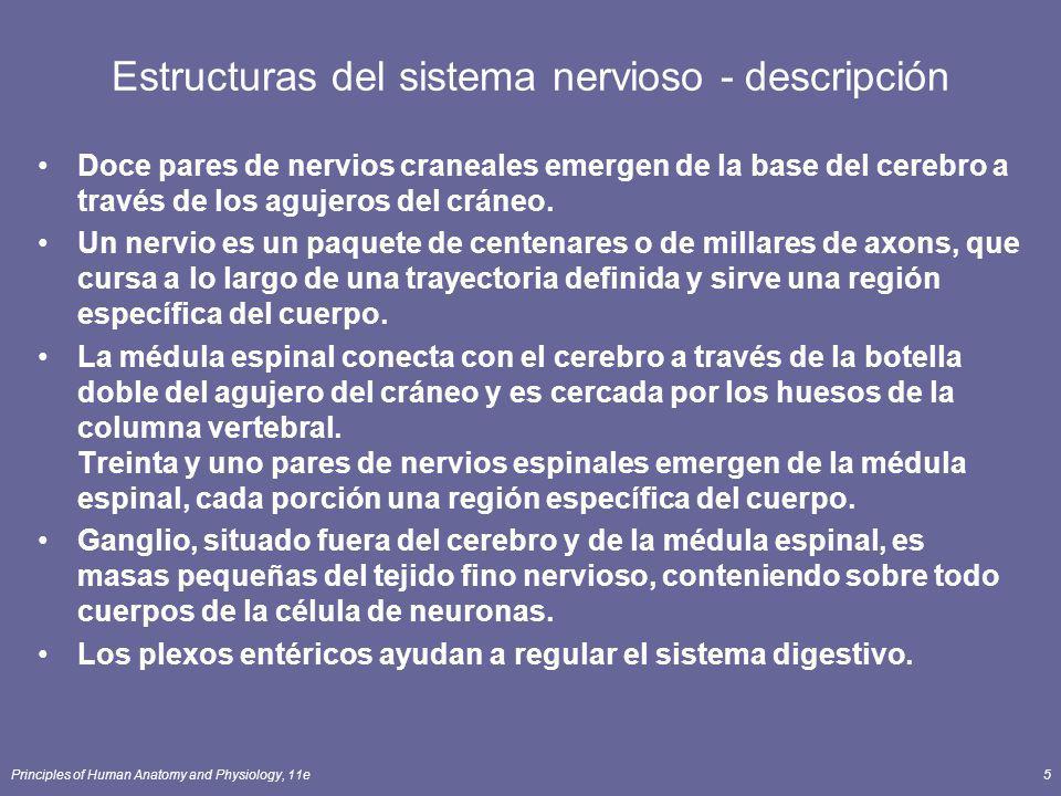 Estructuras del sistema nervioso - descripción