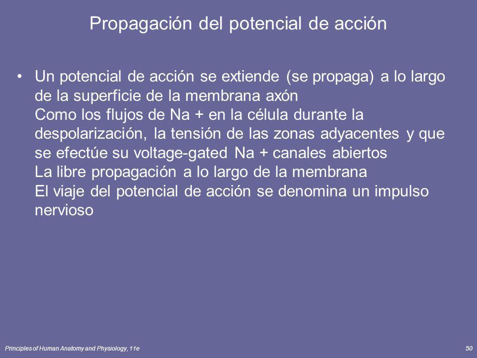 Propagación del potencial de acción