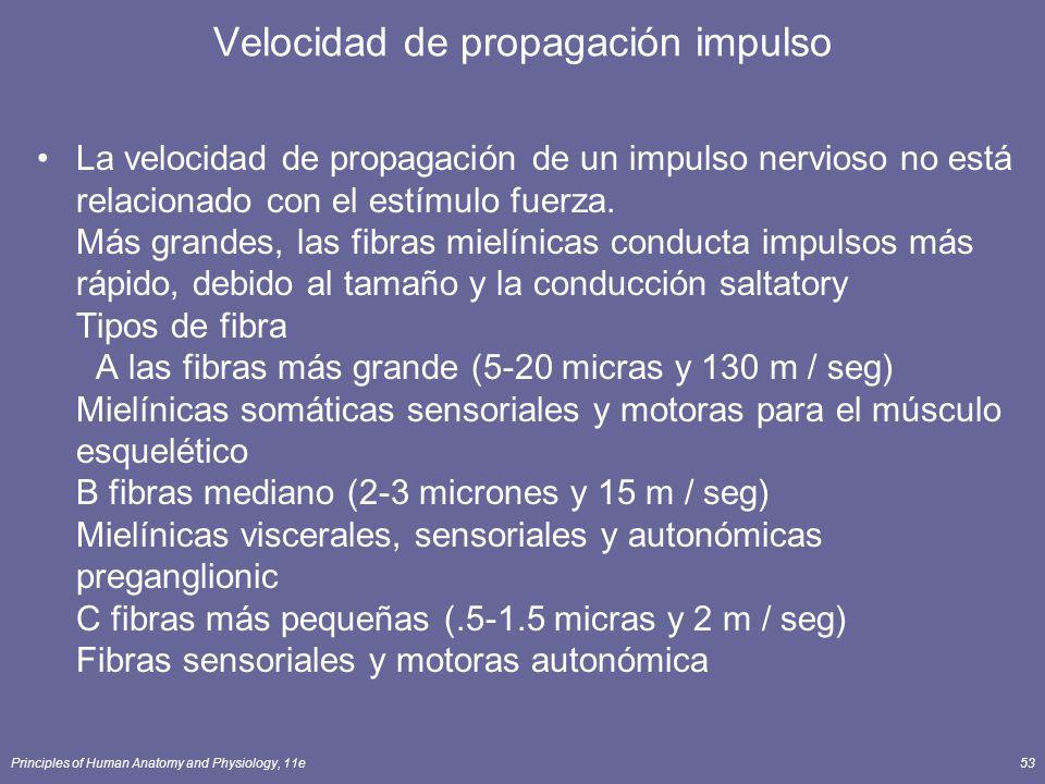 Velocidad de propagación impulso