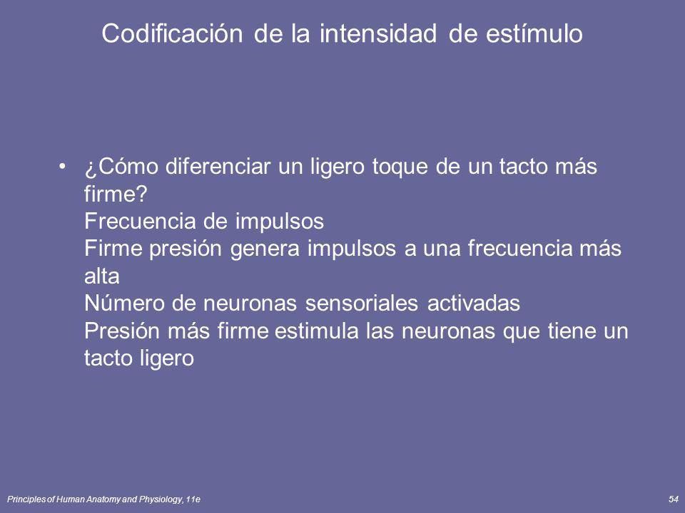 Codificación de la intensidad de estímulo