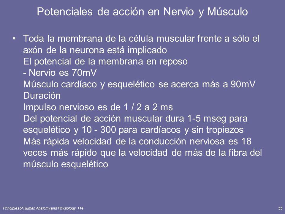 Potenciales de acción en Nervio y Músculo