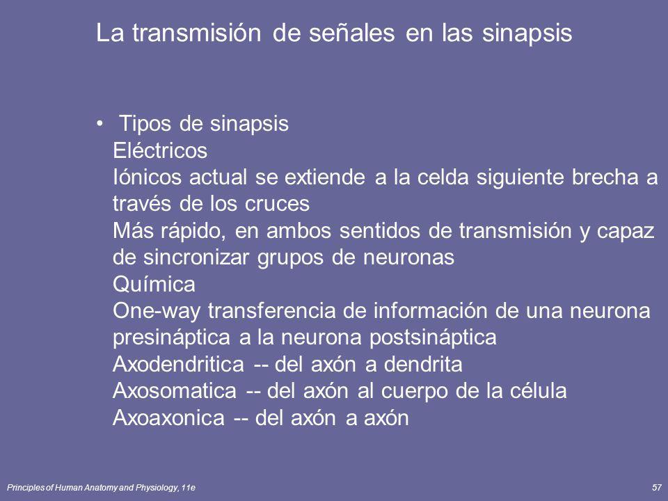 La transmisión de señales en las sinapsis