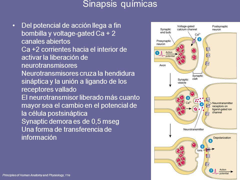 Sinapsis químicas