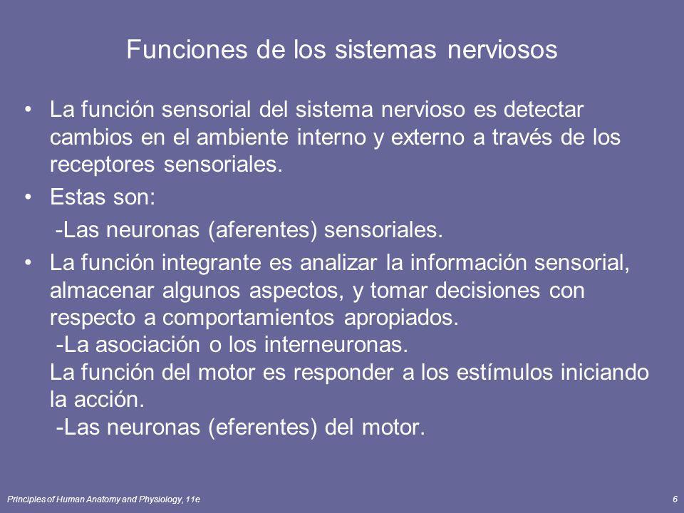 Funciones de los sistemas nerviosos