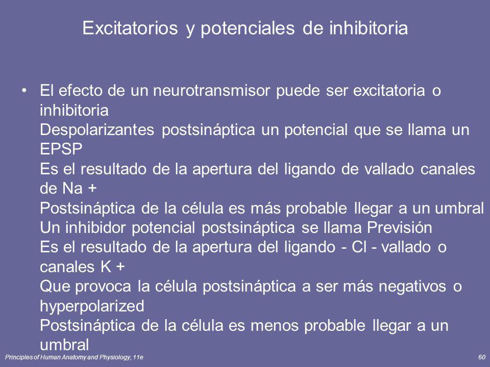 Excitatorios y potenciales de inhibitoria