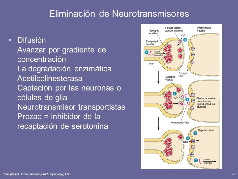 Eliminación de Neurotransmisores