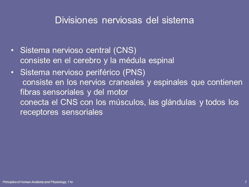 Divisiones nerviosas del sistema