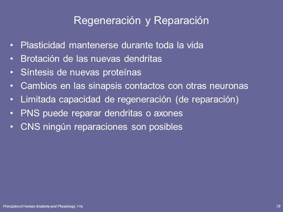 Regeneración y Reparación