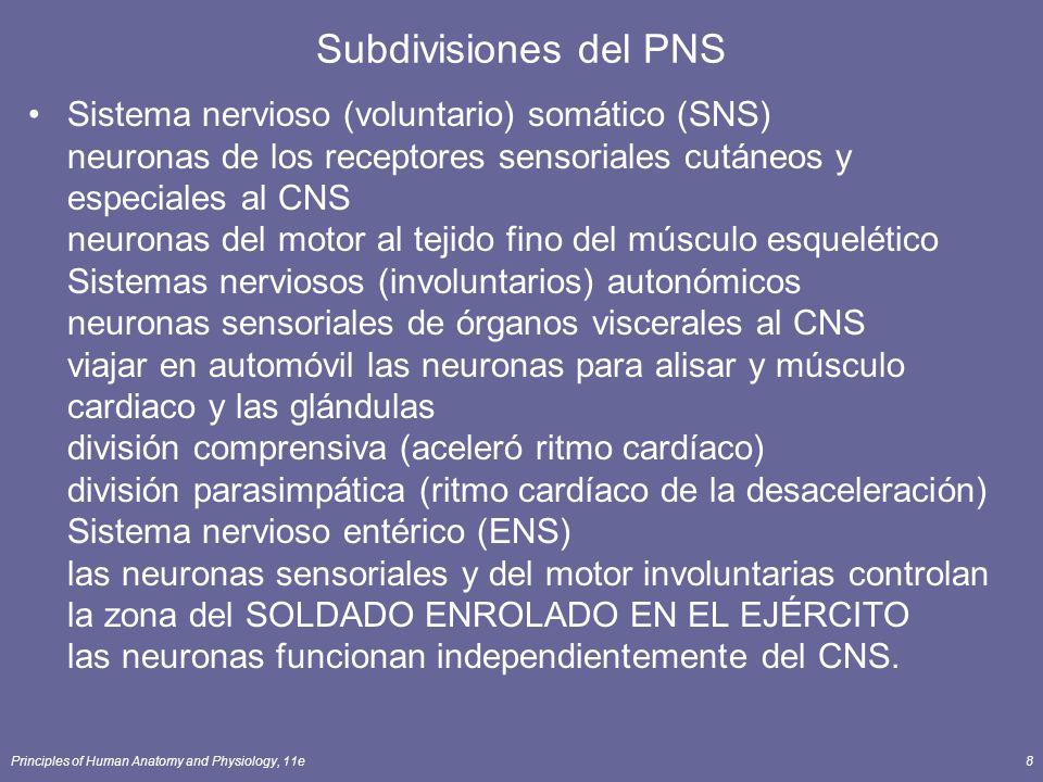 Subdivisiones del PNS