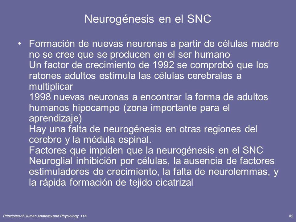 Neurogénesis en el SNC
