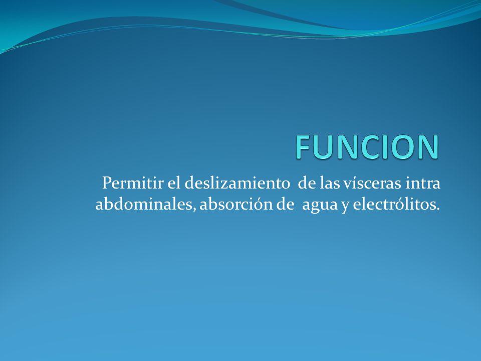 FUNCION Permitir el deslizamiento de las vísceras intra abdominales, absorción de agua y electrólitos.