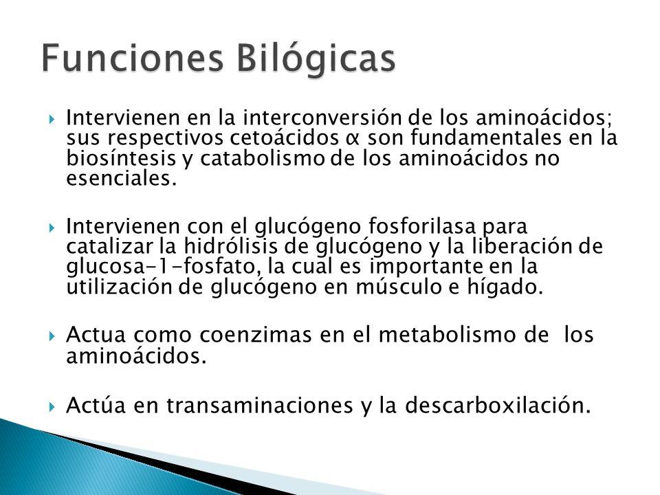 Funciones Bilógicas