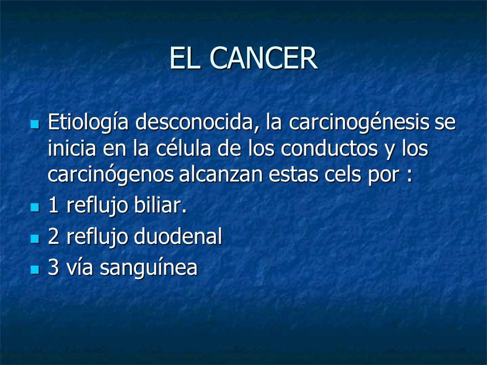 EL CANCER Etiología desconocida, la carcinogénesis se inicia en la célula de los conductos y los carcinógenos alcanzan estas cels por :
