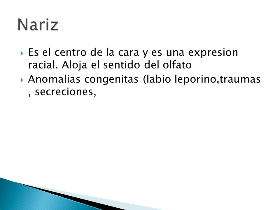 Nariz Es el centro de la cara y es una expresion racial.