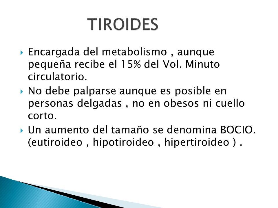 TIROIDES Encargada del metabolismo , aunque pequeña recibe el 15% del Vol. Minuto circulatorio.
