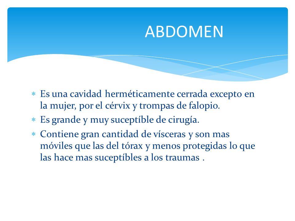ABDOMEN Es una cavidad herméticamente cerrada excepto en la mujer, por el cérvix y trompas de falopio.