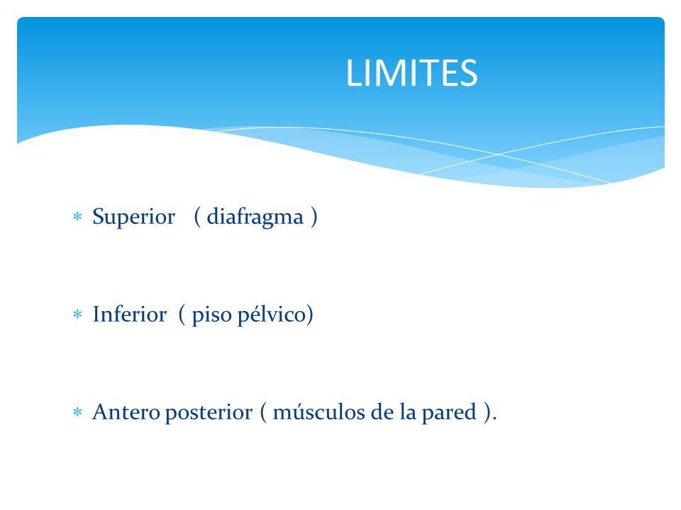 LIMITES Superior ( diafragma ) Inferior ( piso pélvico)