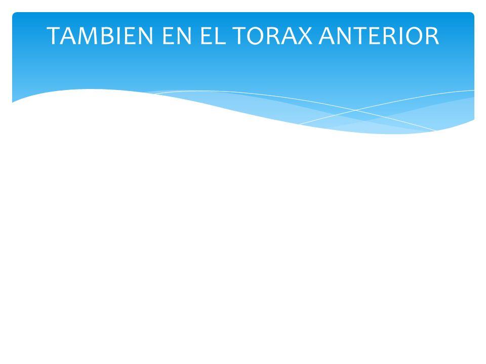 TAMBIEN EN EL TORAX ANTERIOR