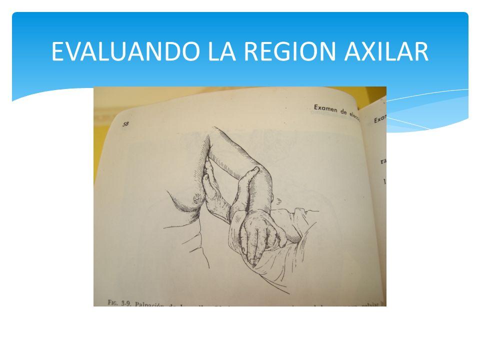 EVALUANDO LA REGION AXILAR