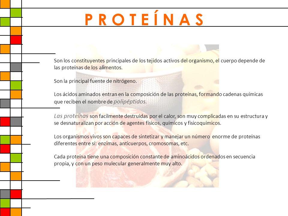 P R O T E Í N A S Son los constituyentes principales de los tejidos activos del organismo, el cuerpo depende de las proteínas de los alimentos.