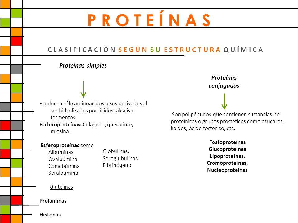 P R O T E Í N A S C L A S I F I C A C I Ó N S E G Ú N S U E S T R U C T U R A Q U Í M I C A. Proteínas simples.