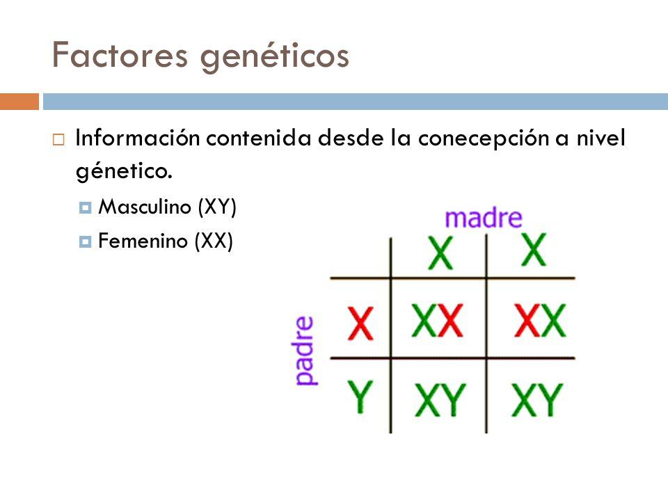 Factores genéticos Información contenida desde la conecepción a nivel génetico.