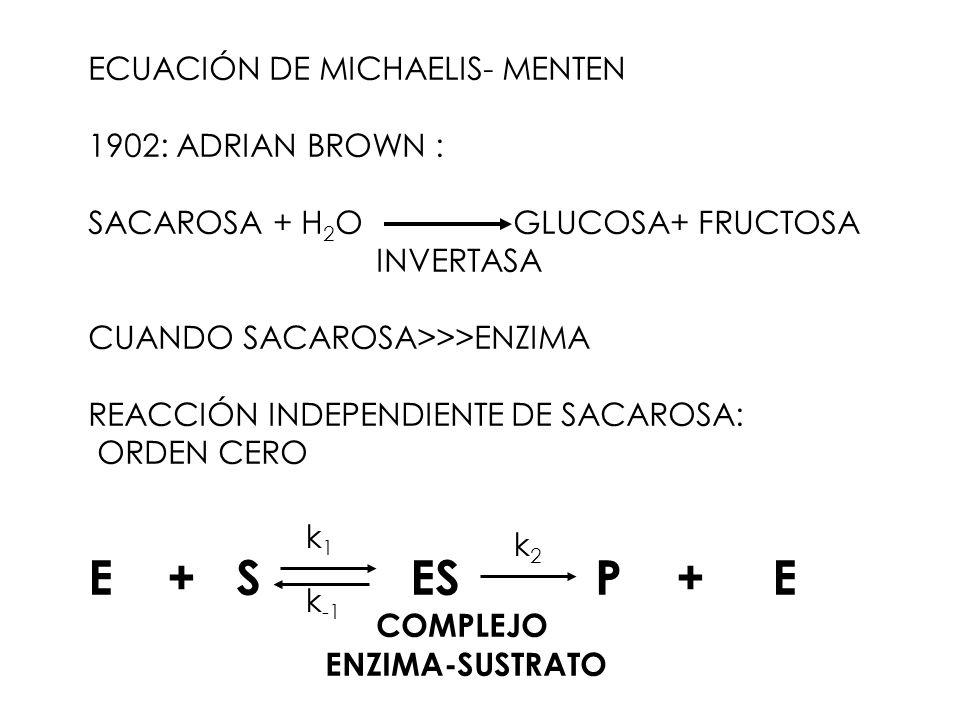 E + S ES P + E ECUACIÓN DE MICHAELIS- MENTEN 1902: ADRIAN BROWN :