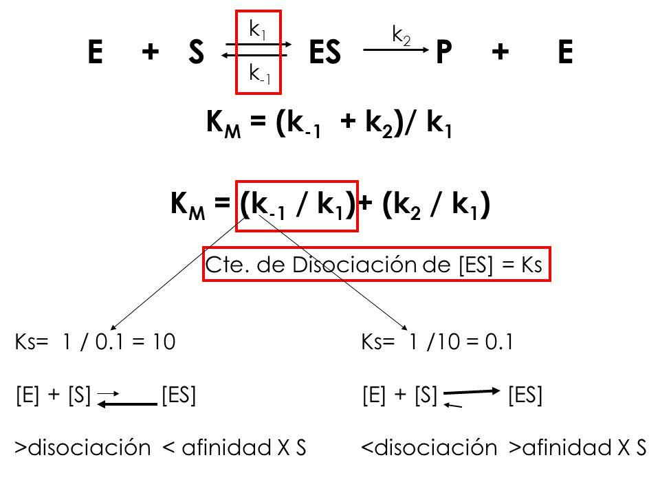 E + S ES P + E KM = (k-1 + k2)/ k1 KM = (k-1 / k1)+ (k2 / k1) k1 k-1