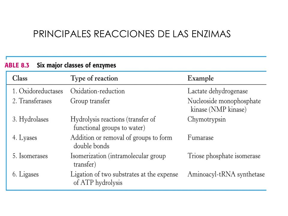 PRINCIPALES REACCIONES DE LAS ENZIMAS