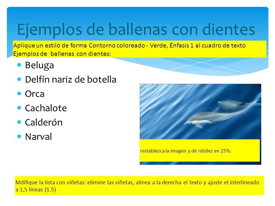Ejemplos de ballenas con dientes