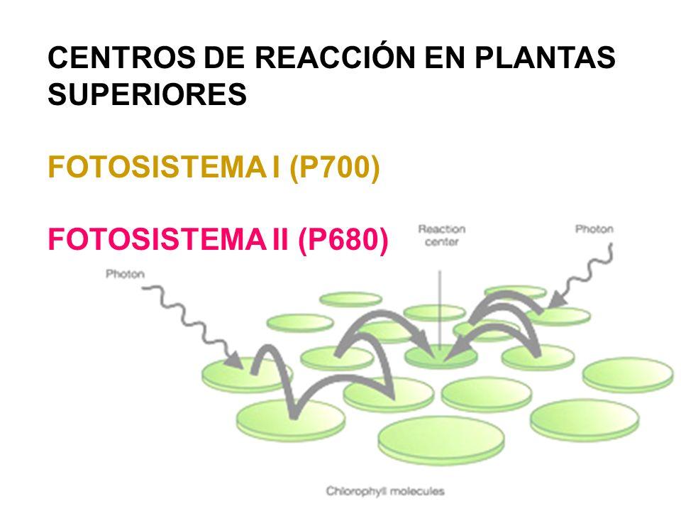 CENTROS DE REACCIÓN EN PLANTAS