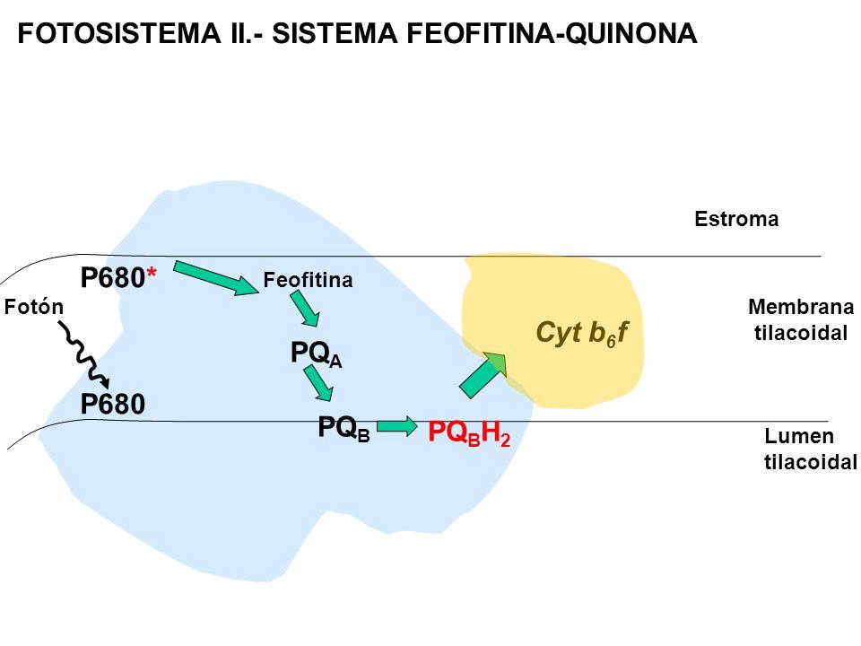 FOTOSISTEMA II.- SISTEMA FEOFITINA-QUINONA