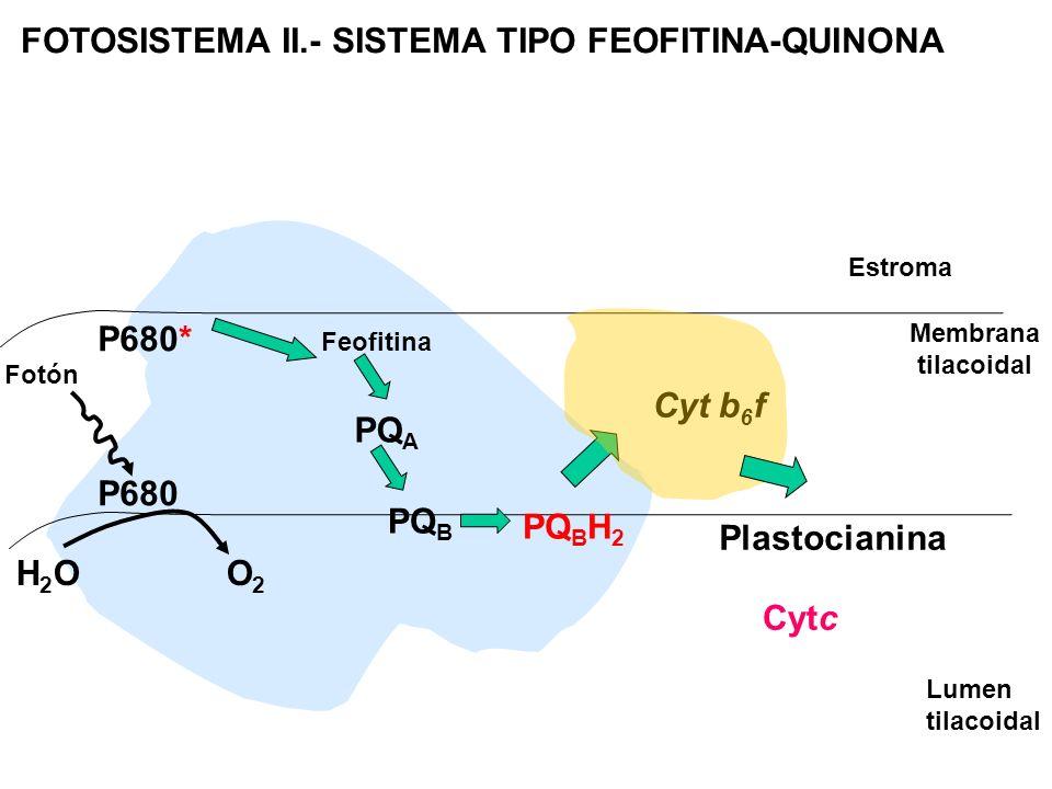 FOTOSISTEMA II.- SISTEMA TIPO FEOFITINA-QUINONA