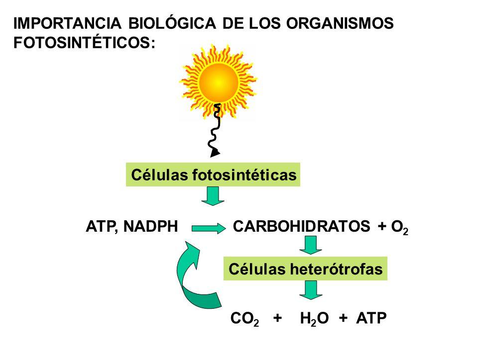 IMPORTANCIA BIOLÓGICA DE LOS ORGANISMOS