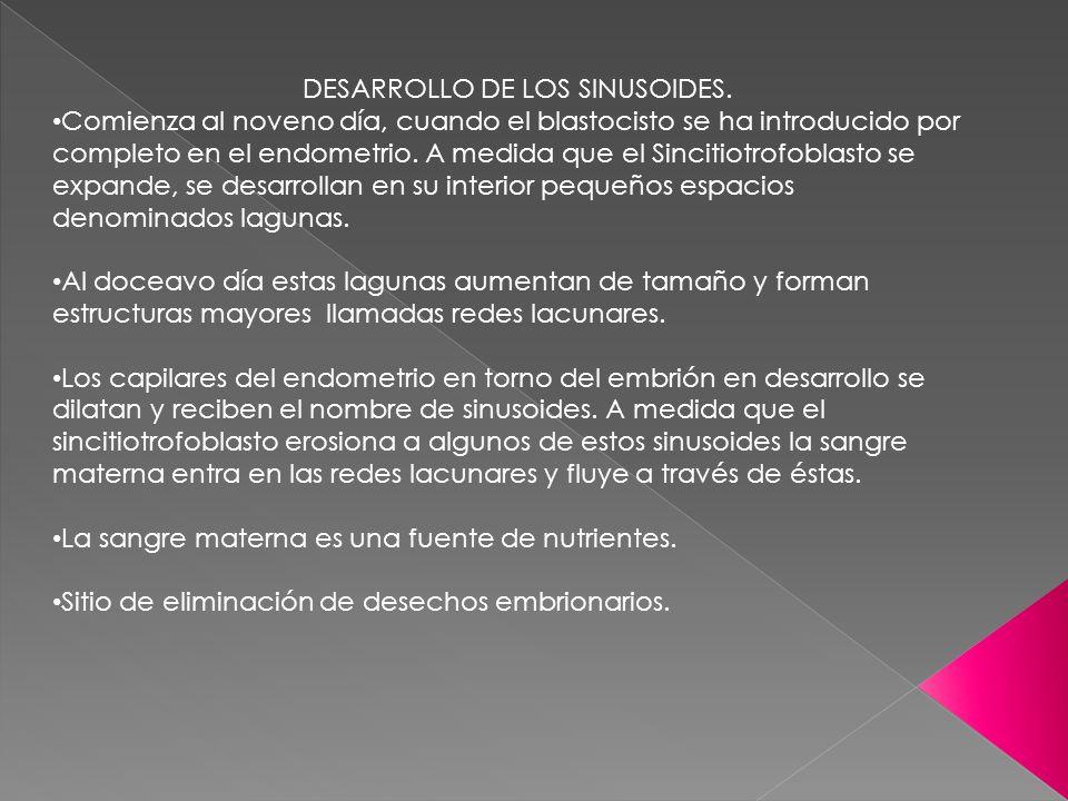 DESARROLLO DE LOS SINUSOIDES.