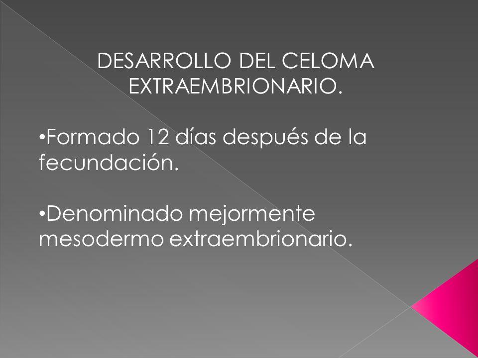 DESARROLLO DEL CELOMA EXTRAEMBRIONARIO.