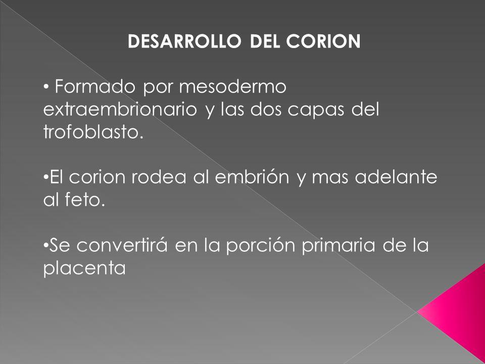 DESARROLLO DEL CORION Formado por mesodermo extraembrionario y las dos capas del trofoblasto. El corion rodea al embrión y mas adelante al feto.
