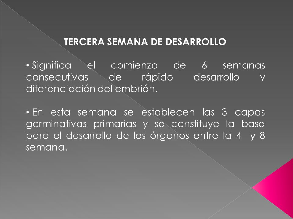 TERCERA SEMANA DE DESARROLLO